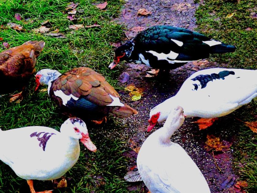 Variegated birds