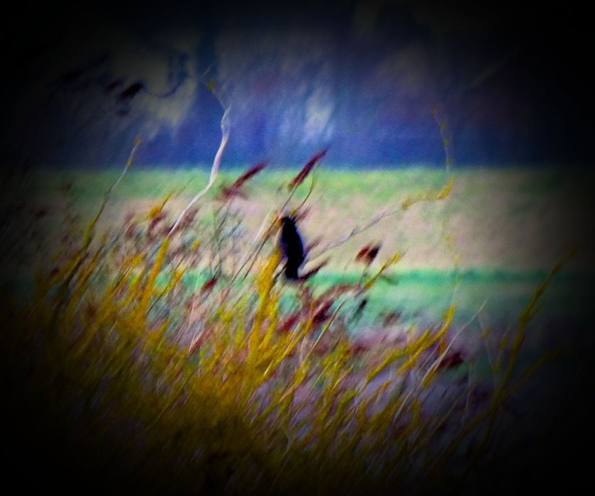 blackbird in tree