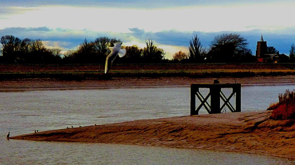 Cormorant, lapwings, church, flying gull