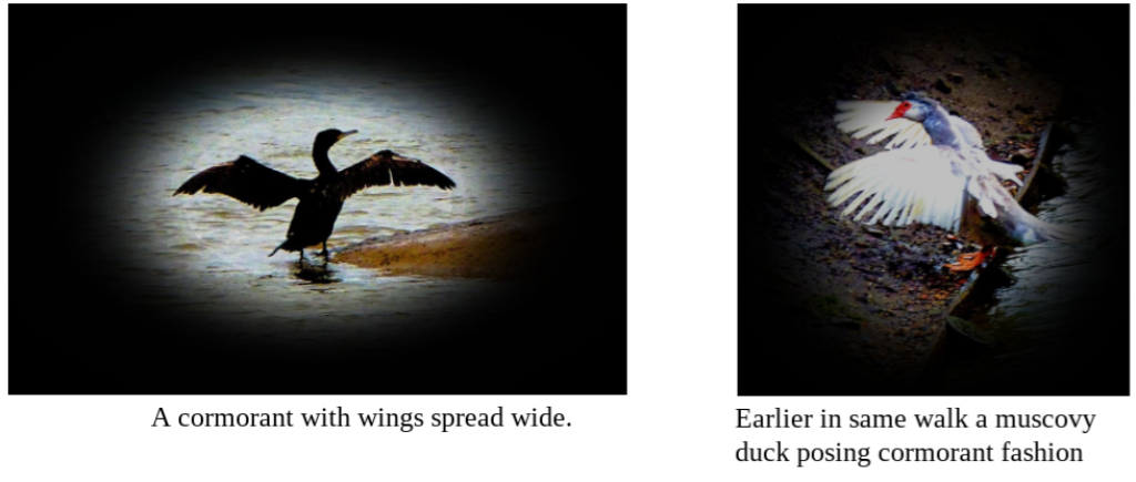 Different Bird Species – Same Pose