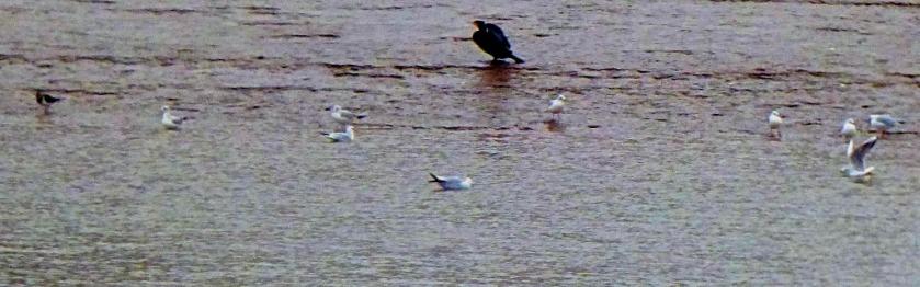 Mixed birds 2