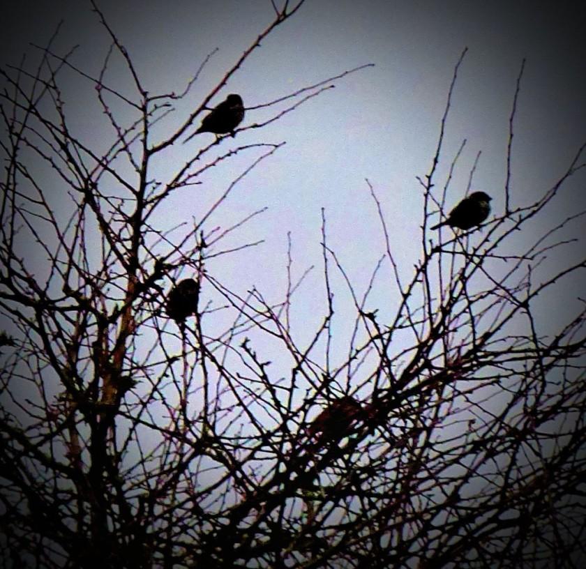 Small birds I
