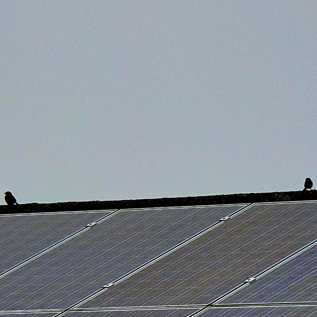 Small birds III