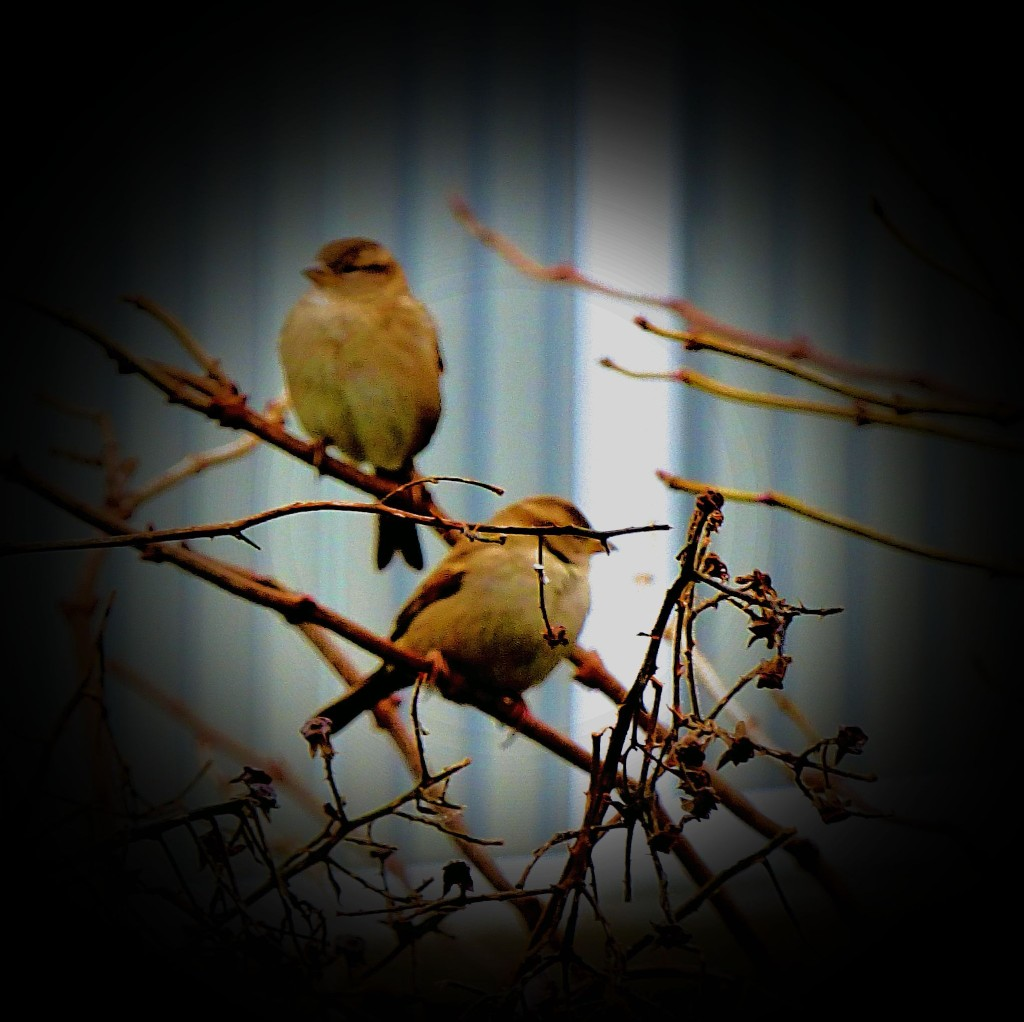 Small birds IV