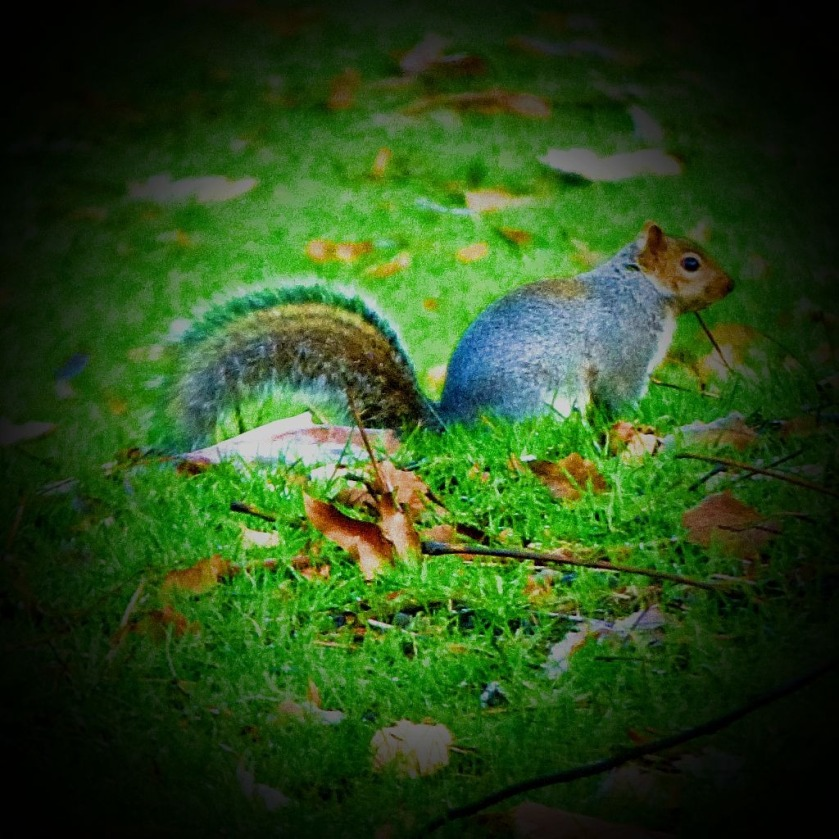 Squirrel I