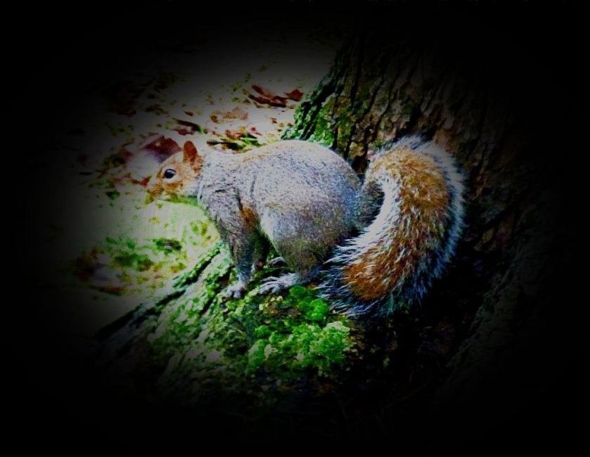 Squirrel CLXI