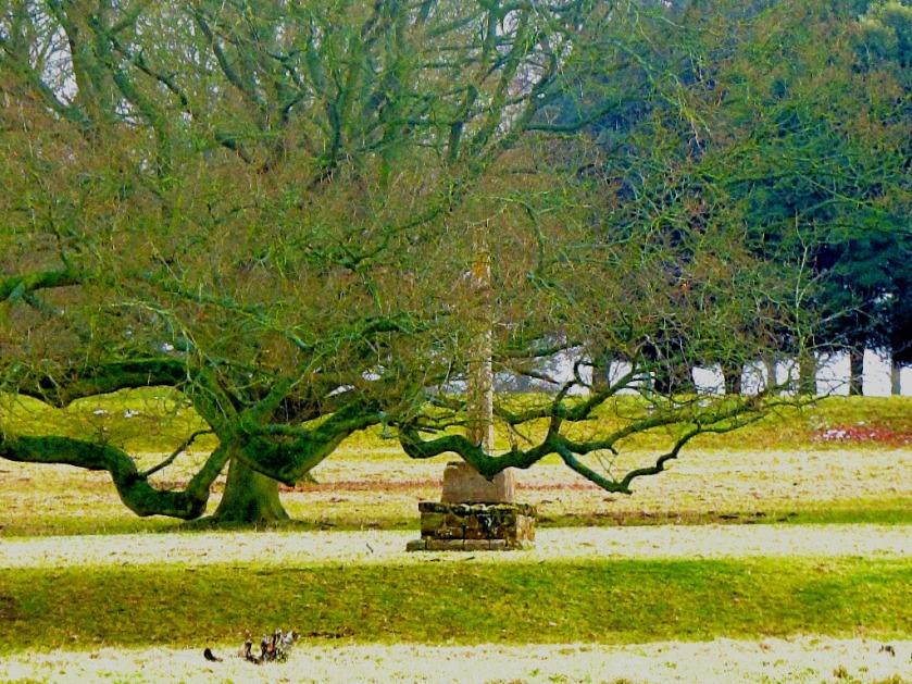 Tree and stonework