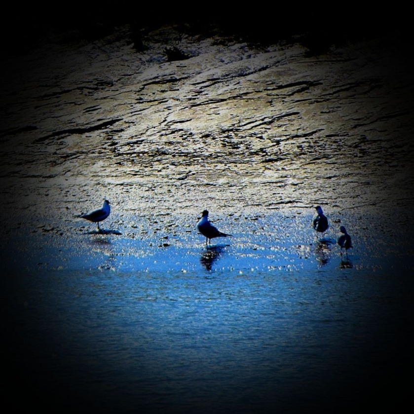 Four large gulls