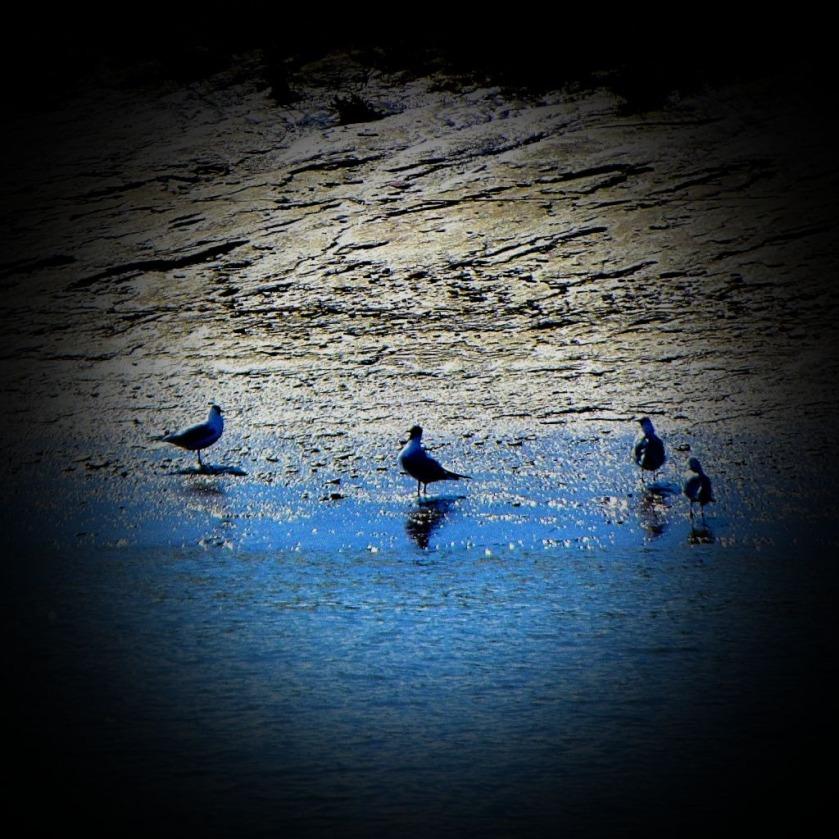 Four large gulls