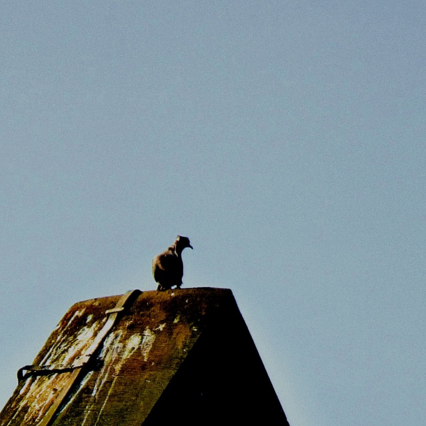 Bird on The Granaries roof