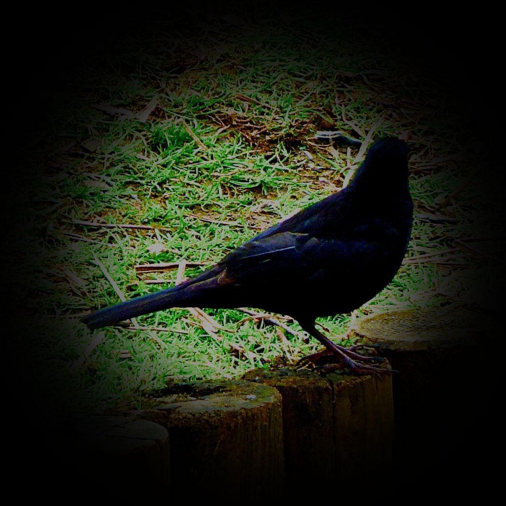 Blackbird IVXLCDM