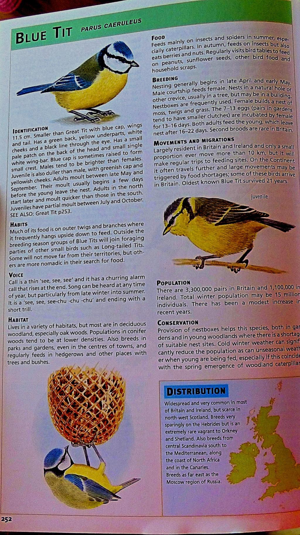 Blue tit - bird book