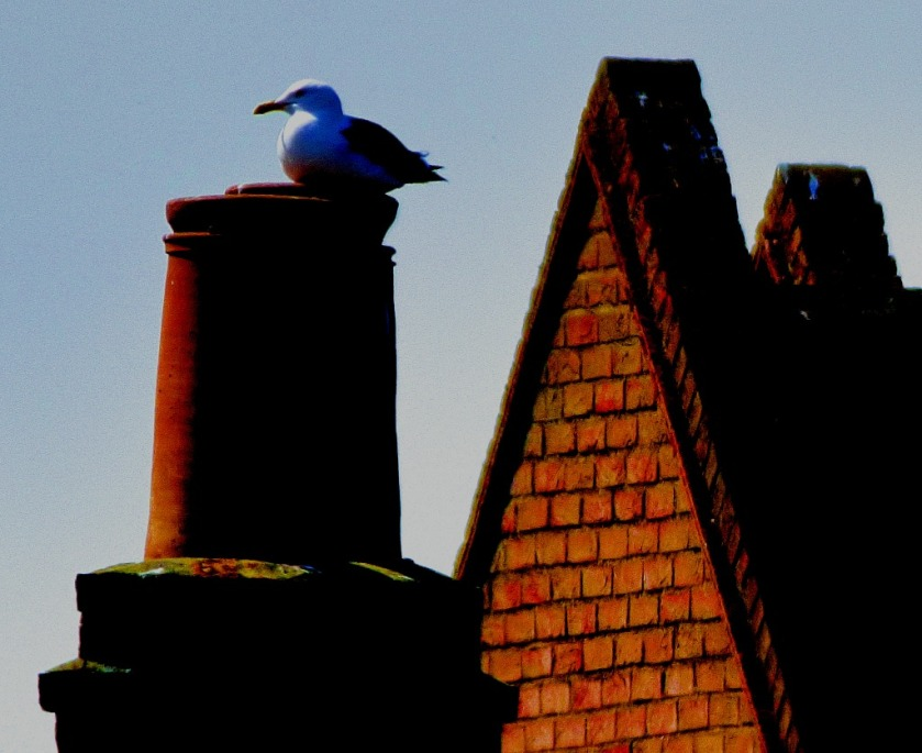 Gull on chimney