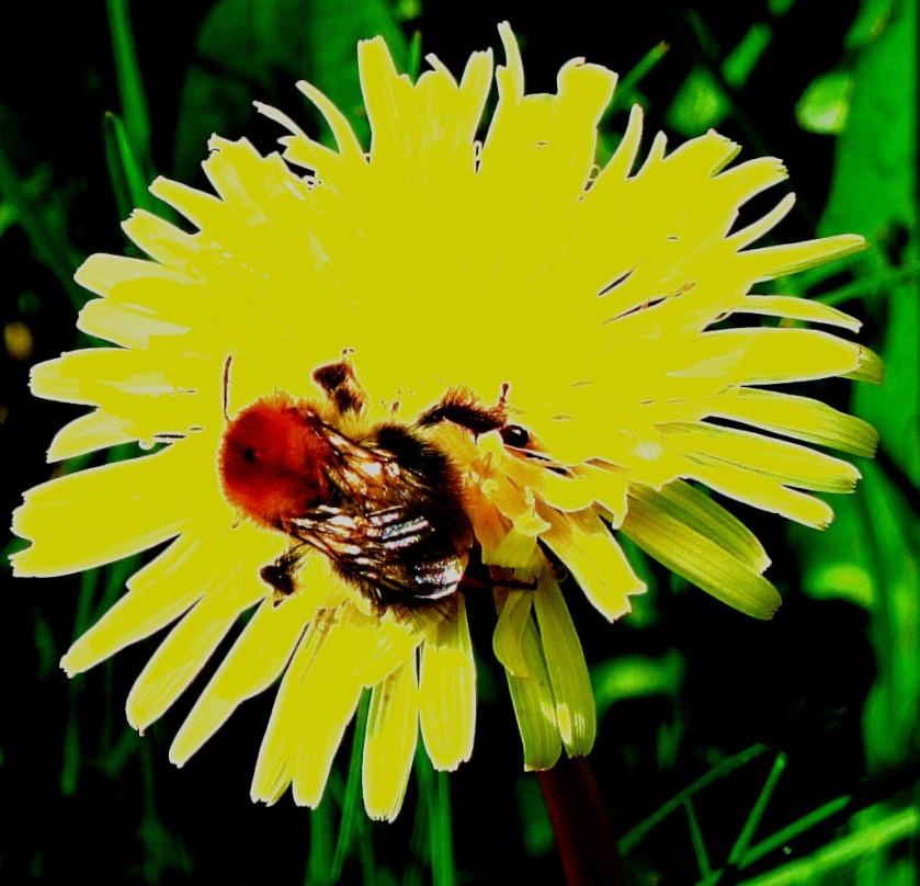 Pollinator I