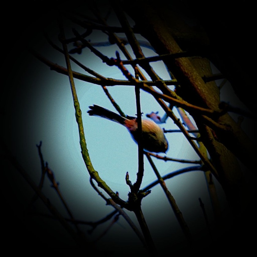 Small bird in branches