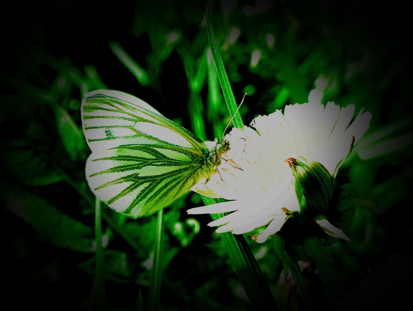 green and white butterfly