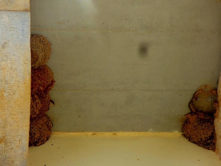 House Martin nests, Ag Nikolaos II