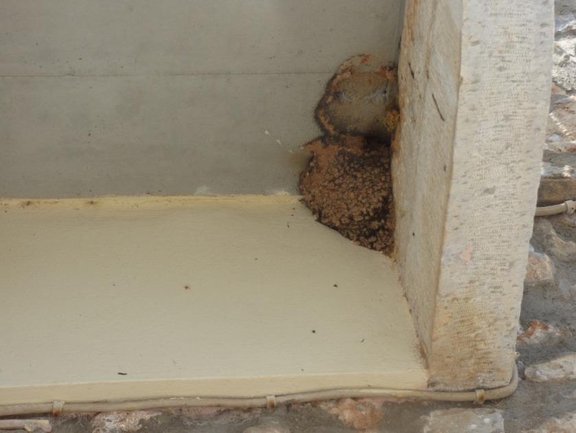 House Martin nests, Ag Nikolaos