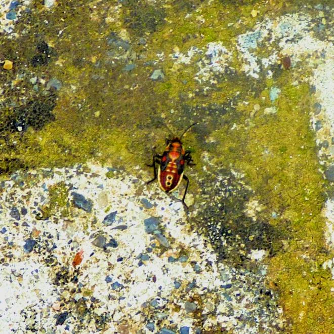 multi-coloured beetle II