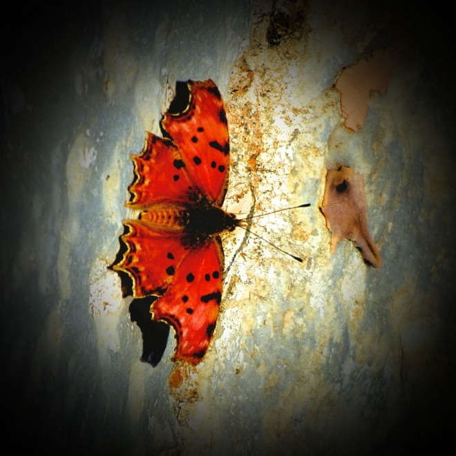 Orange butterfly III