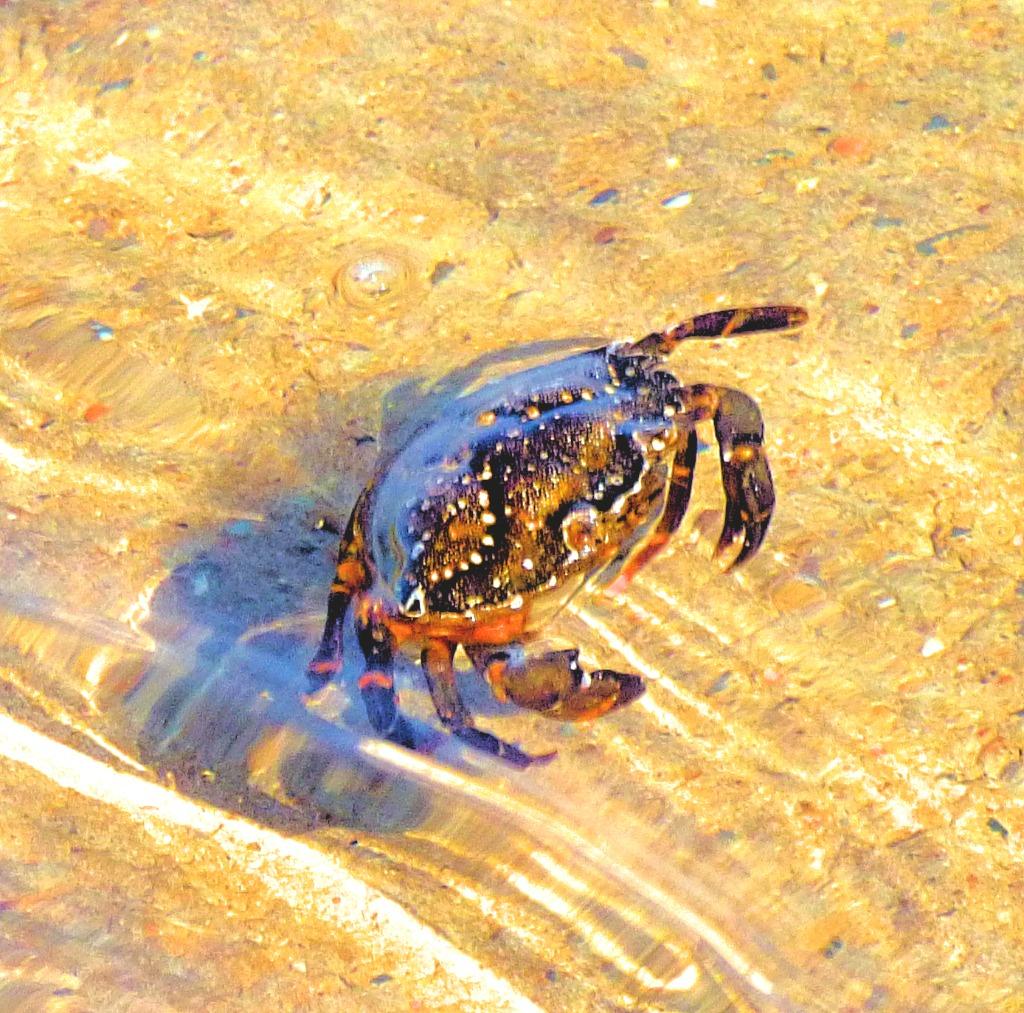Crab I