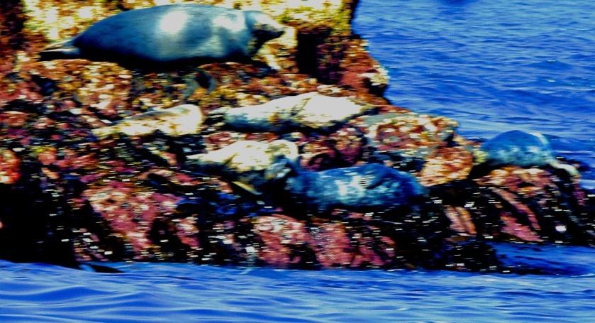 four seals
