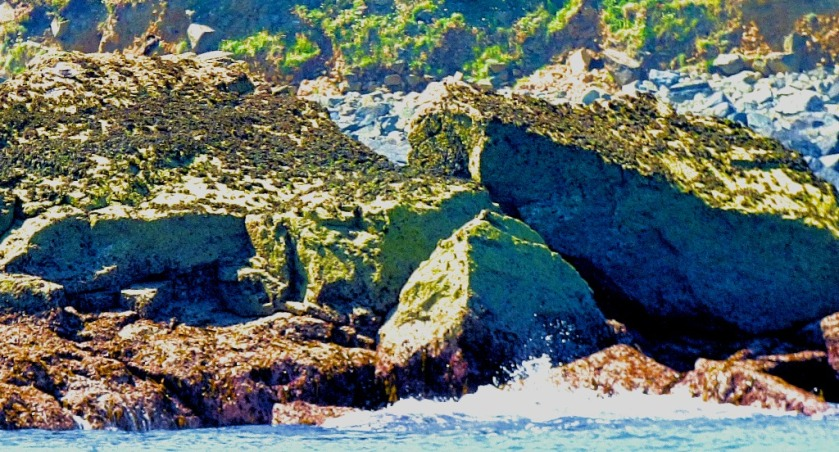 rocks with birds