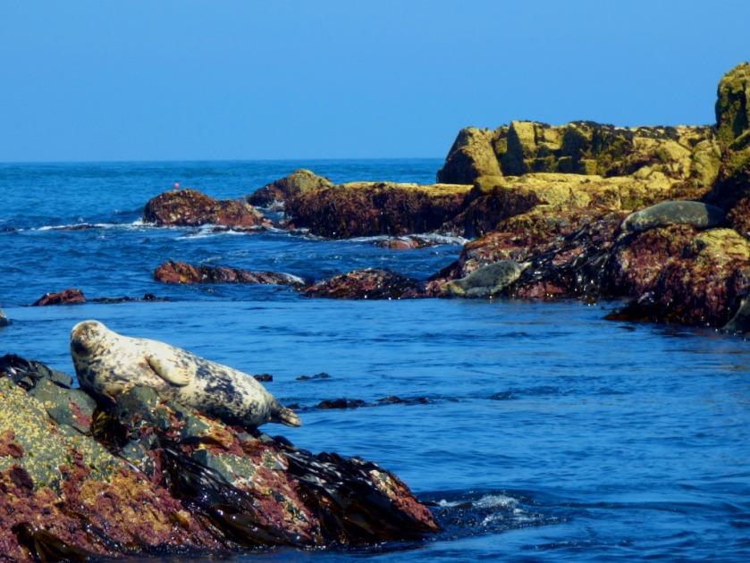 seal waves a flipper II