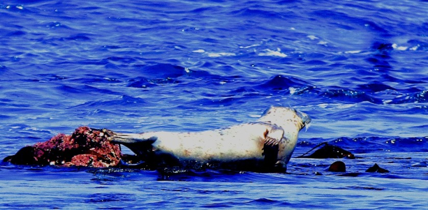 seal waves a flipper