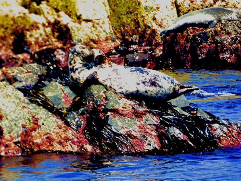 Seal waves