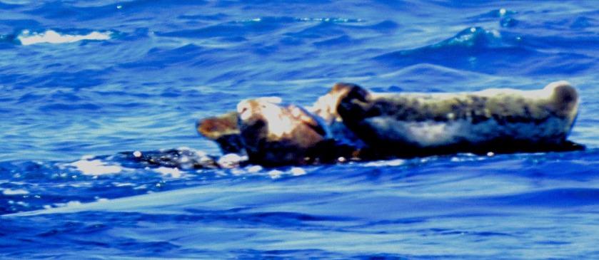 Seals VII