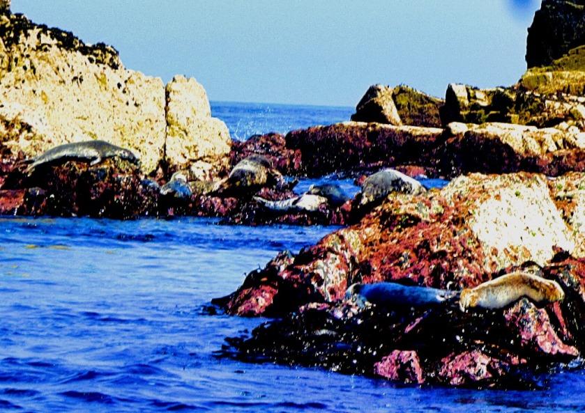 Seals XIII
