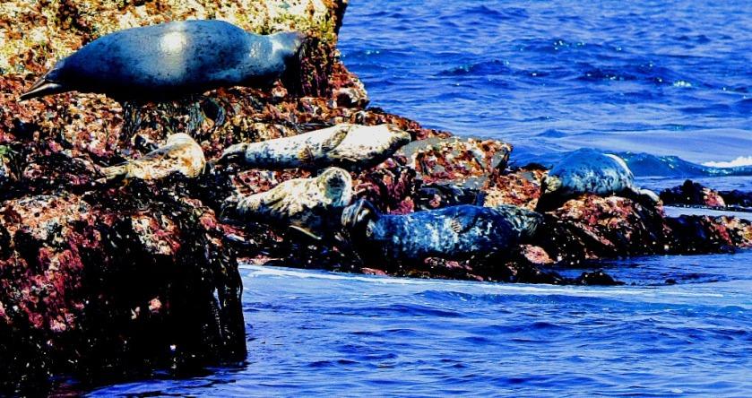 Seals XIV