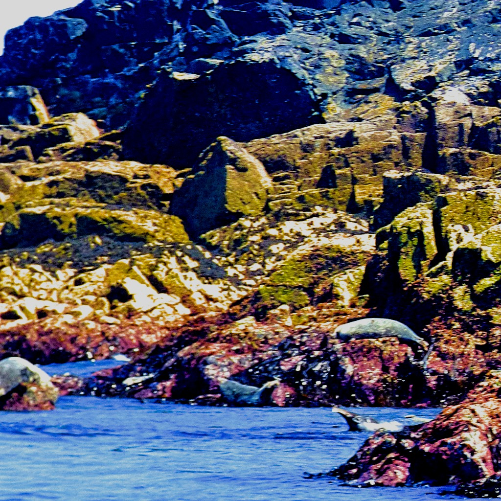 A Grockle's Eye View of Cornwall 3: A Visit to a SealColony