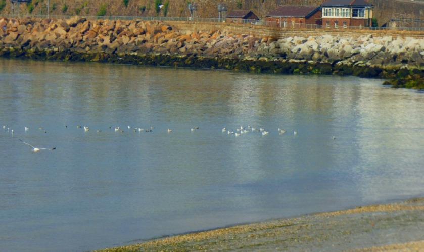 Gulls and signal box