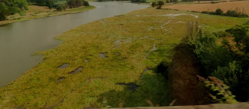 Marshy river