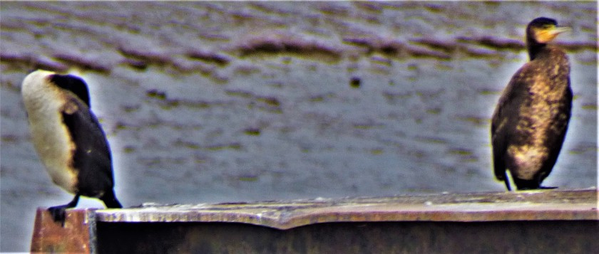 P1280483 (2)