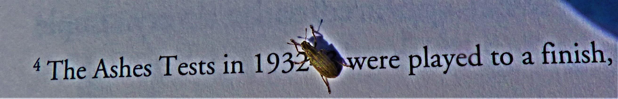 P1310651 (2)