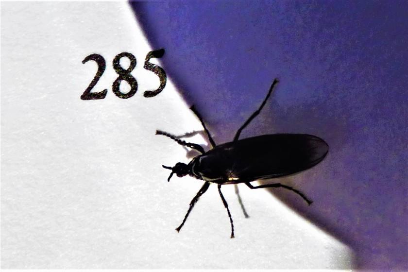 P1310974 (2)