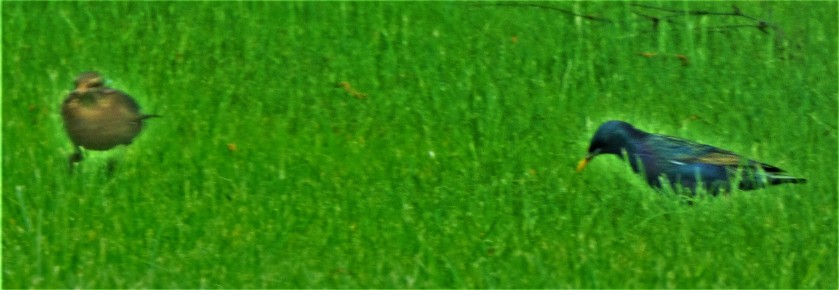 P1320388 (2)